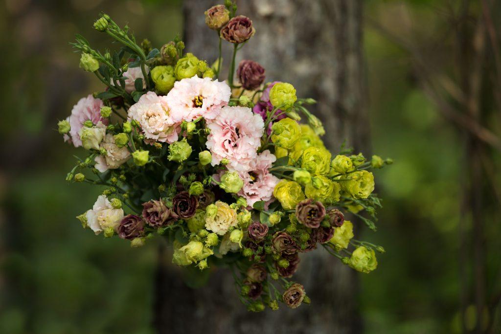 Petites fleurs blanches et vertes
