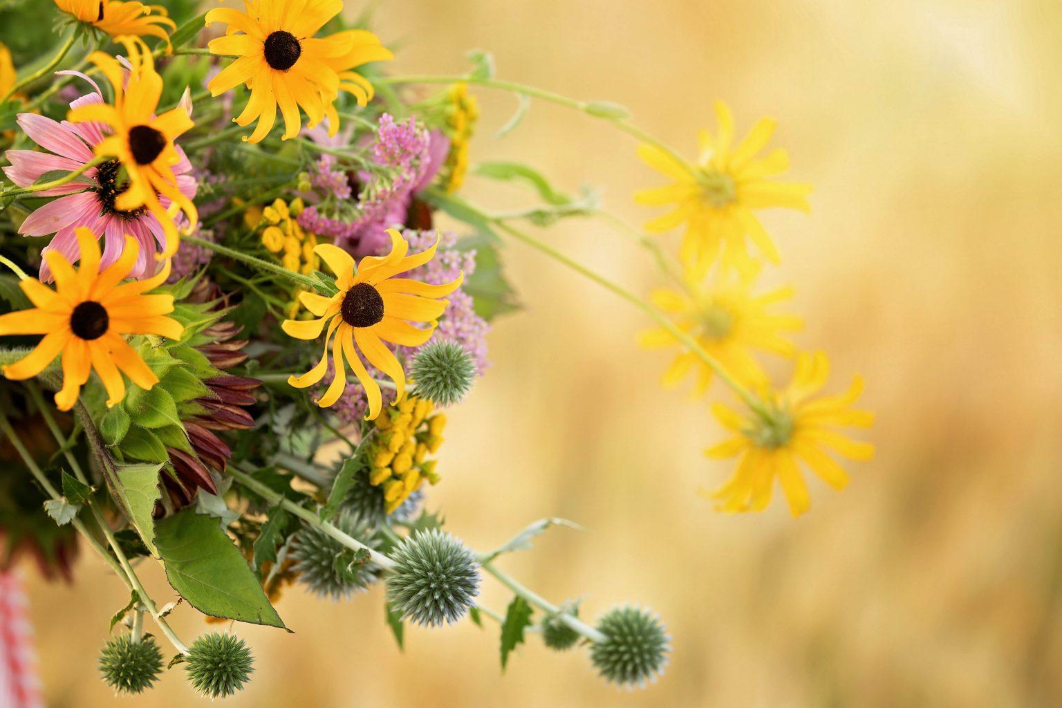 Fleurs echinops